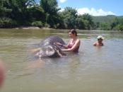 Bathing an Elephant, Thailand