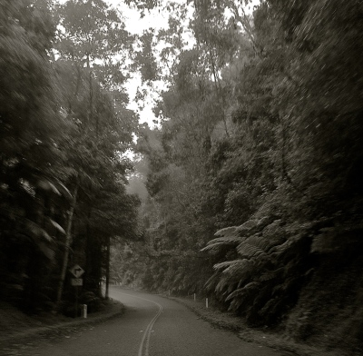 Rainforest Drive