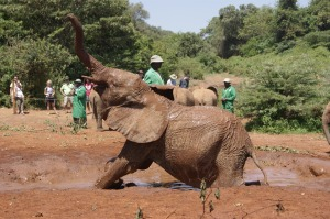 Play time in the water hole at the David Sheldrick Wildlife Trust Elephant Orphanage